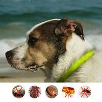 DOODA собаки любимчика Блошиный Reprllent Воротник Cat Health Supplies Safe Human отпугивающее насекомых браслете