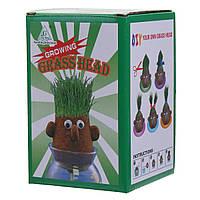 Мини Волшебный Растущая трава Глава Образование Игрушки Случайные 4PCS Куклы Дети Дети Craft DIY Подарки
