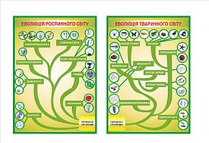 Картонные плакаты по Биологии
