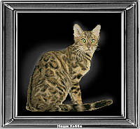 """Набор для частичной вышивки крестом №30912 """"Бенгальская кошка"""""""