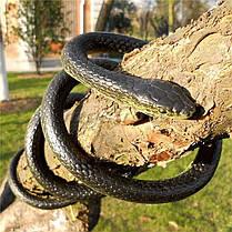 120см мягкая резиновая змея игрушка откровенны мешок партии наполнителями хэллоуин шутка трюк проп, фото 3