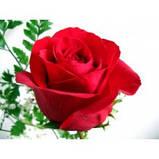 """Гидролат розы """"Дамасской"""", фото 2"""