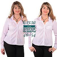 eca273c9d3a Белая блузка рубашка кофточка из хлопка .Бл 001-3