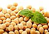 Для чего нужно обрабатывать семена сои инокулянтами?