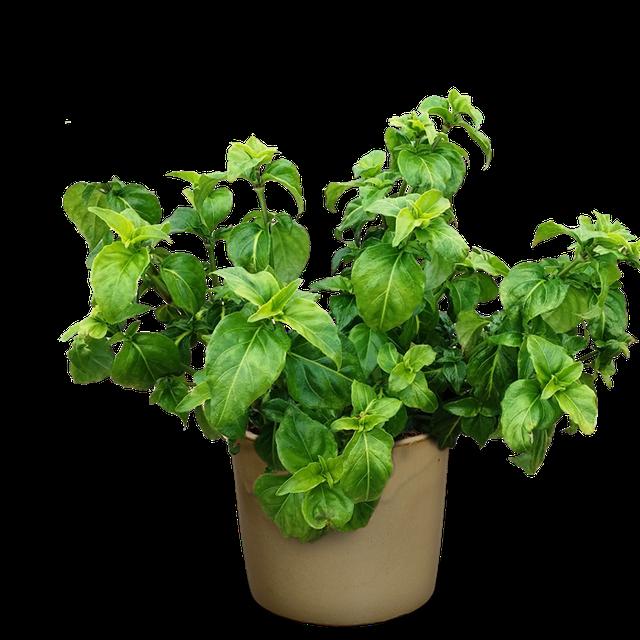 органическое выращивание шпината