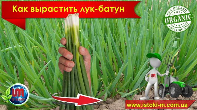 органические удобрения и подкормка овощей и зелени