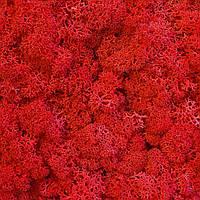 Стабилизированный мох ягель красный