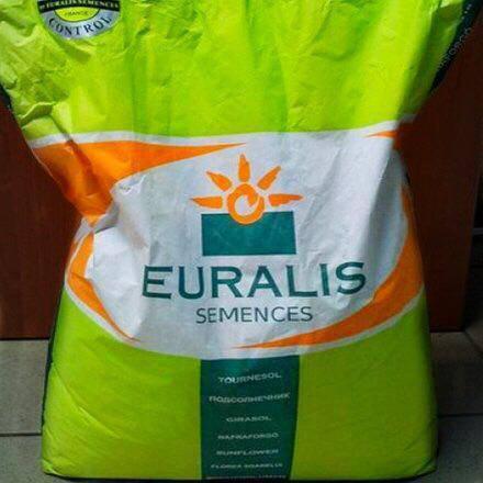 Семена кукурузы, Евралис, ЕС Брилиант, ФАО 350, фото 2