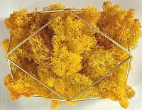 Стабилизированный мох ягель желтый