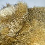 Воротник капюшон лиса готовый крой 30смх90см , фото 3
