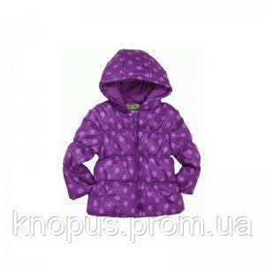 """Демисезонная курточка """"Фиолетовые горошки"""",  PIDILIDI линейка BUGGA. Размеры 92-104"""