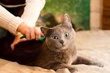 Грумінг кішок