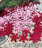 Пайетки, снежинки, красные с голограммой, 20х20 мм, 10 гр/уп