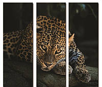 "Модульнаякартина из 3-х частей""Леопард на черном"" 60х60 см"