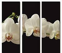 "Модульнаякартина из 3-х частей""Орхидея белая на черном"" 60х60 см"