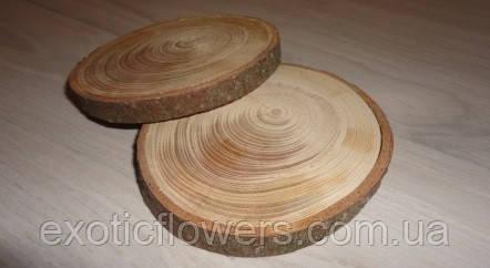 Зріз дерева. Модрина (модрина) 6 - 8 см