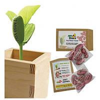 Деревянный мини-бонсай магия семян фасоли рабочий стол бонсай растения