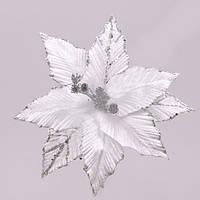 Рождественник (Пуансетия) 75301
