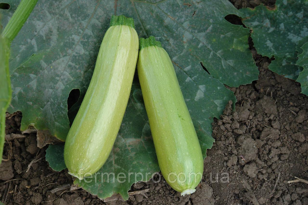 Семена кабачка Искандер F1 \ Eskenderany 500 семян Seminis