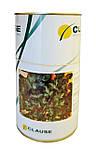 Семена петрушки Новас CLAUSE