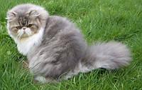 Шампуни гигиенические для собак и кошек СЕРИИ «МЁД и ТРАВЫ»