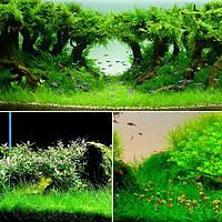 Yani Aquatic Растение Семена Крытый декоративный травы с травой озеленение