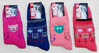 Носки женские теплые махровые х/б-стрейч. Опт 14,5 грн