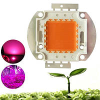 100W Full Spectrum 380-840nm COB LED Увеличить светлый чип DIY для внутреннего использования Растение