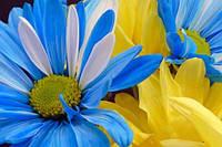 З нагоди великого національного свята нашої державності – Дня Незалежності України!