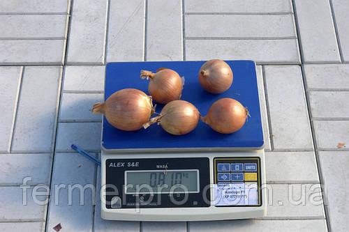 Семена лука Антилопа F1 \ Antelope F1 250 000 семян Seminis
