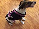 Шлея-петля для собак Премиум Софт Trixie М малиновая, фото 8
