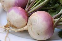 Семена Репа Белая с пурпурным кончиком (столовая)