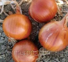 Семена лука Соня F1 \ Sonia F1 250.000 семян Cora Seeds