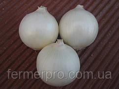Семена лука Вайт Опера F1 \ White Opera F1 250.000 Seminis