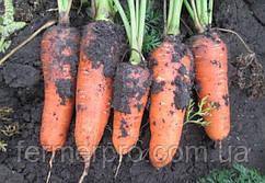 Семена моркови Абако F1 (1.4-1.6 мм) \ Abaco F1 Seminis 1000.000 семян