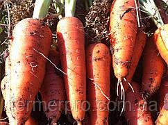 Семена моркови Абако F1 (1.6-1.8 мм) \ Abaco F1 Seminis 1000.000 семян