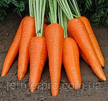Семена моркови Абликсо F1 \ Ablixo F1 Seminis 1000.000 семян