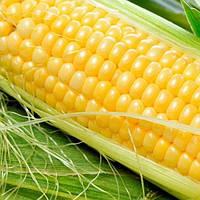 "Семена кукурузы ""Оржиця"" ФАО 240"