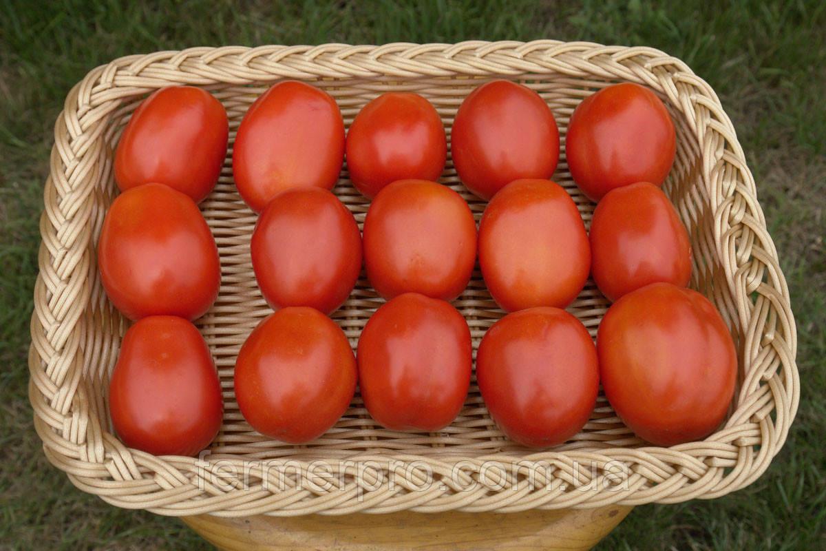 Насіння томату Фуззер F1 \ Fuzzer F1 1000 насінин Seminis