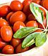 Семена томата  Велоз F1 \ Veloz F1 1000 семян Seminis, фото 2