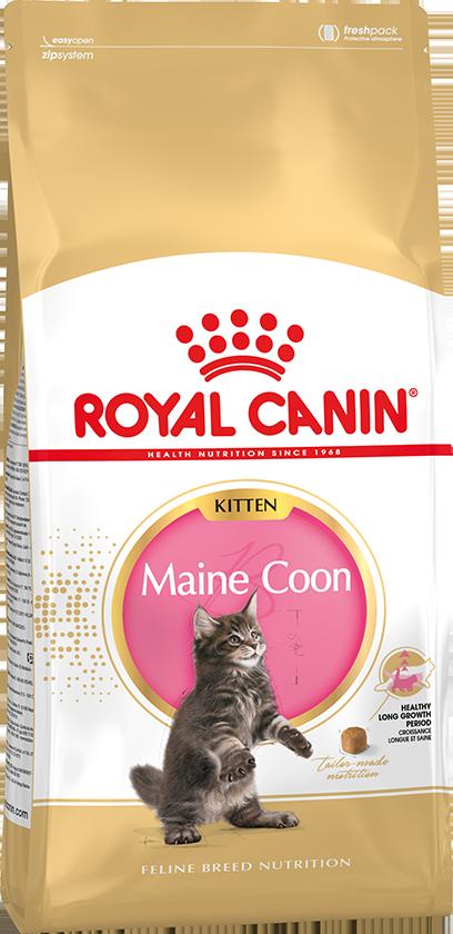 Royal Canin (Роял Канин) MAINE COON Kitten Сухой корм для котят породы мейн-кун, 4 кг