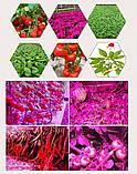 Фито прожектор 10 Вт 12 Вольт  водостойкий для гидропоники, теплиц, растений, фото 6