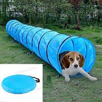 Домашнее животное аджилити обучение повиновения домашнее животное туннель канала собака игры на открытом воздухе ловкость упражнения по