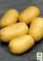 """Семенной среднеспелый картофель """"Каррера"""" (на варку, 1 репродукция) 1кг"""