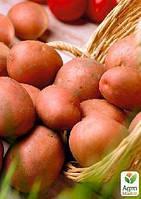 """Семенной среднепоздний картофель """"Моцарт"""" (на жарку, 1 репродукция) 1кг"""
