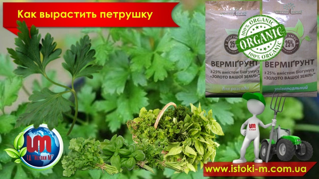 органические удобрения для посадки и подкормки петрушки