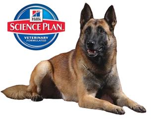Science Plan - здоровое питание собака