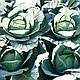 Семена капусты Джинтама F1 \ Gintama F1  калиброванных 2500 семян Rijk Zwaan , фото 5
