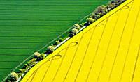 Особливості вирощування ріпаку: управління посівами та потреба у поживних речовинах