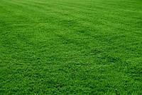 Универсальная газонная трава